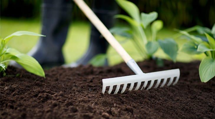 Kratta och odla egna grönsaker