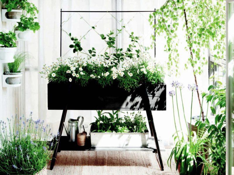 Odla ätbara växter inomhus