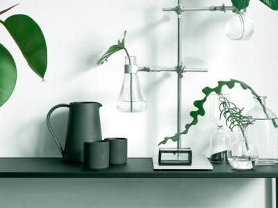Green is the new black – Inred med växter